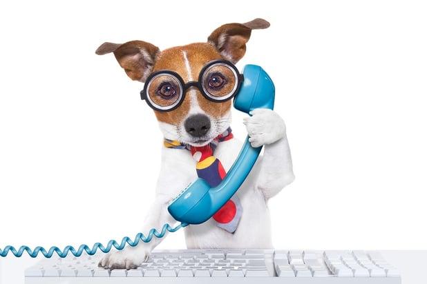 bigstock-Dog-On-The-Phone-89575421.jpg